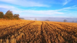 Autumn stubble field at Dotland near Willow View Cottage self catering northumberland.