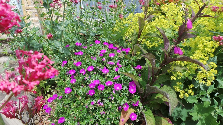 Spring garden flowers Willow View Cottage self catering Northumberland