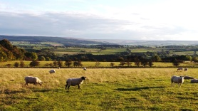 Lovely views over Hexhamshire rural Northumberland